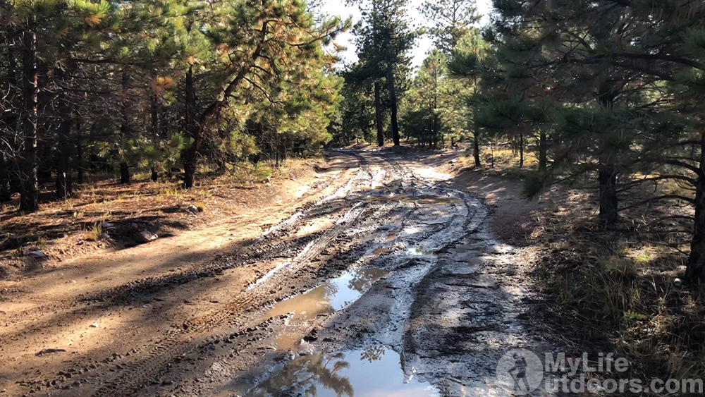 Muddy Forest Service Road